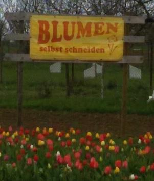 20160407_125512_Blumen_schneiden