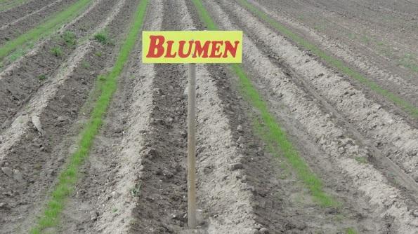 DSC04773_Blumen_alle_weg